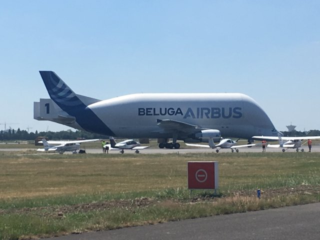 Beluga-in-St.-Nazaire